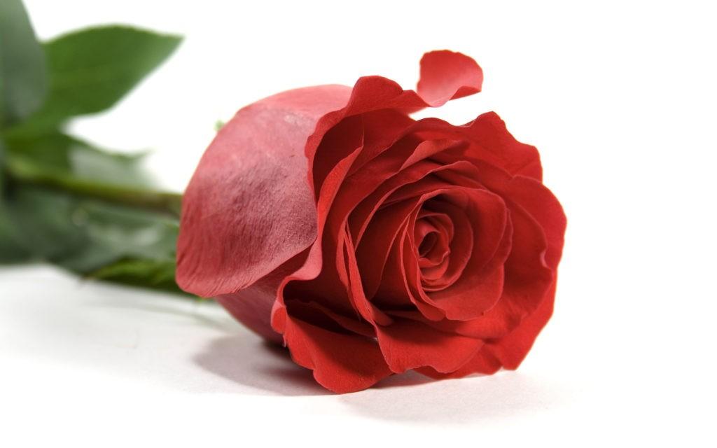 Притча. Червона троянда. Кращі притчі на українській мові
