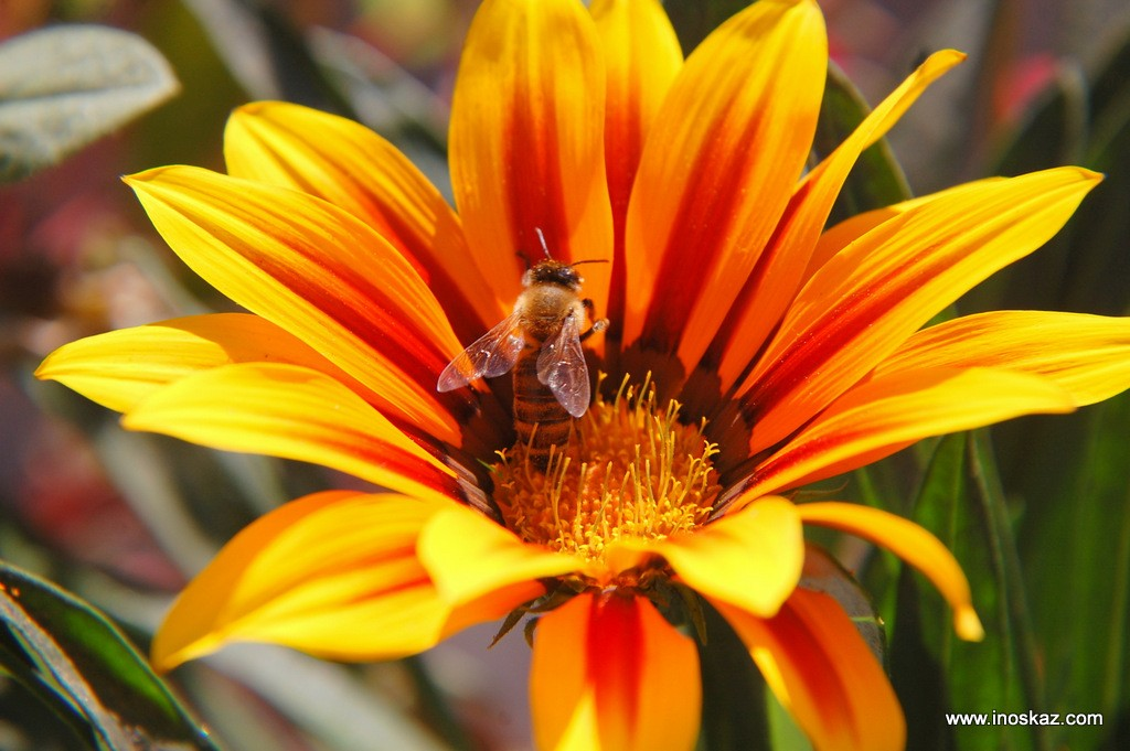 Муха і Бджола