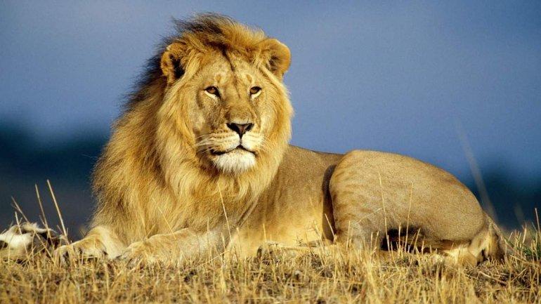 Лев та мишеня. Притча