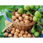 Промисловий сад волоського горіха на 3-й рік